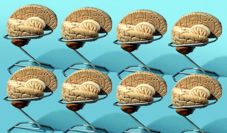 Eight educational models of the human brain
