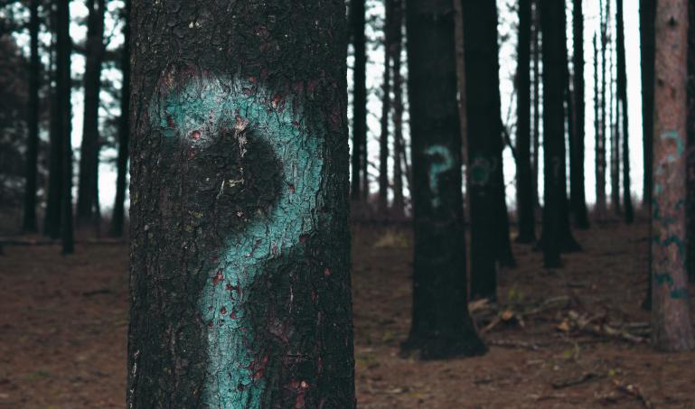 Question marks in forest